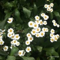 liitle flowers