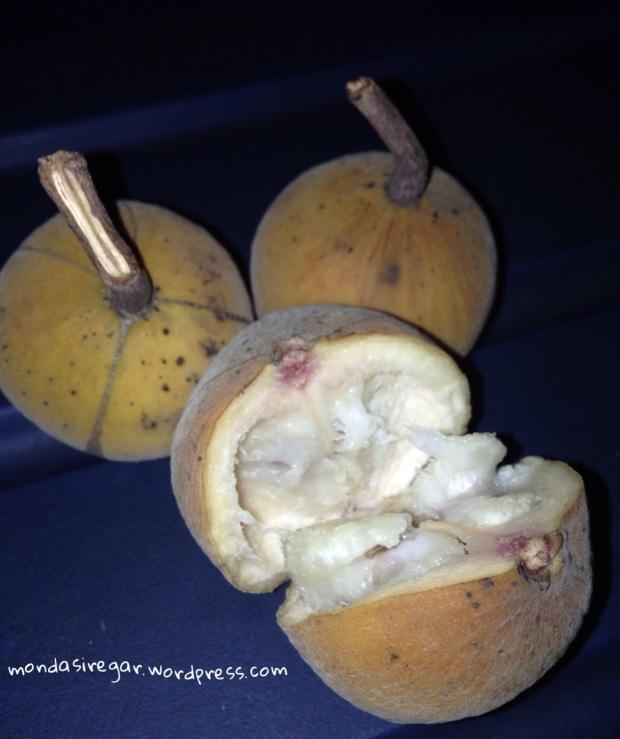 buah kecapi Sandoricum koetjape