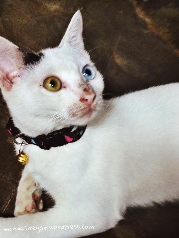 cat's eyes, dwiwarna, , heterochromia iridium